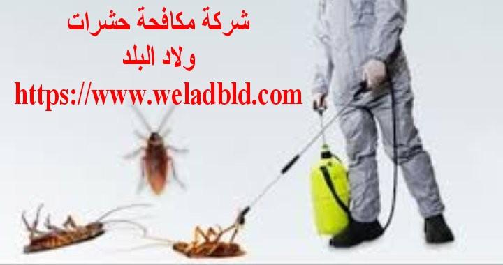 شركة مكافحة حشرات في البرشاء