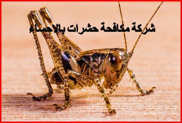 شركة مكافحة حشرات بالاحساء 0553364436